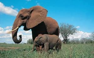 Kenya : African Safari Club compte dépasser 8 300 clients cette année