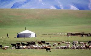 URGA MONGOLIE  : La Mongolie n'a de cesse de se développer, de nombreuses demandes à la carte, la brochure 2012 est sorti avec quasiment pas d'augmentation par rapport à 2011…