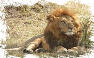 African Safari Club : hausse de 43,6% du volume d'affaires