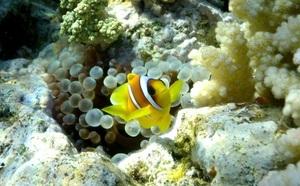 Agents de voyages : comment vendre des séjours de plongée sous-marine ?