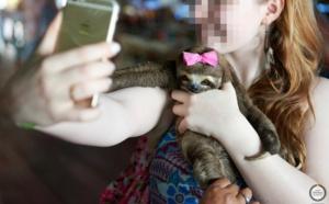 """Le Costa Rica lance une campagne """"stop"""" aux selfies avec les animaux"""