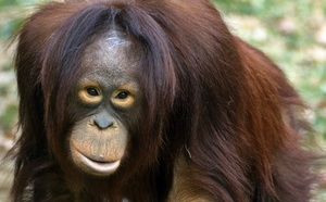 Indonésie : Bornéo et Sumatra attirent toujours plus de touristes