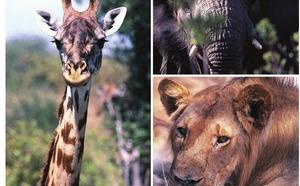 Tanzanie : Crystal TO va affréter des vols sur Zanzibar en décembre 2012