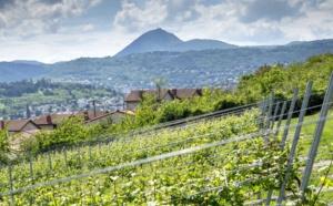 Stratégie volcanique pour les côtes d'Auvergne, un «petit» vin devenu grand