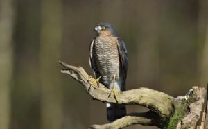 Arbres et oiseaux: balade auparc Montsouris, cepoint chaud de la biodiversité parisienne