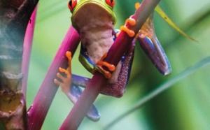 L'Office de Tourisme du Costa Rica édite un manuel des ventes