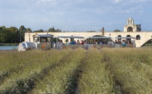 Visite Avignon, du transport haut de gamme aux circuits touristiques dans la Cité des Papes