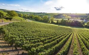 Echappez-vous dans les vignobles du Val de Loire