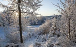 Balade en forêt - DR Gilles Lansard