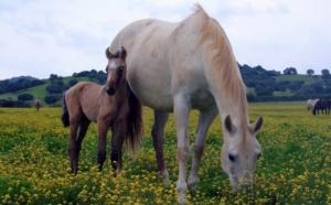 Mon cheval pour une ministre…