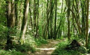 Campings.com est désormais propriétaire d'une parcelle dans la forêt de Cléden-Poher (29) et chacun des membres de l'équipe y a son arbre - DR : Campings.com