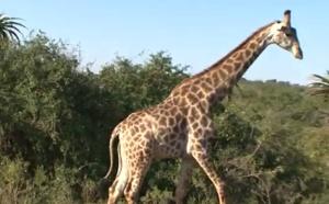 Voyage en Afrique du Sud : Durban, entre gratte-ciels, croyances et savane
