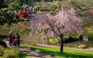 Parc Oriental de Maulévrier (Cholet) : vivez la floraison des cerisiers comme si vous étiez au Japon