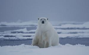 Croisières polaires : L'ours et l'apéro...