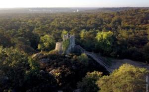 Journée internationale des forêts : deux visites exclusives proposées en forêt de Fontainebleau