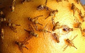 1288 milliards de dollars: chiffrer les dégâts causés par les invasions biologiques pour enfin agir