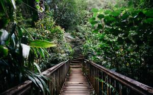 La Réunion, intensément nature