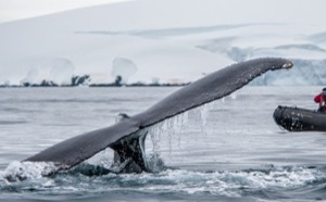 Ponant : un documentaire tourné sur les baleines à bosse, primé à l'Ocean Film Festival
