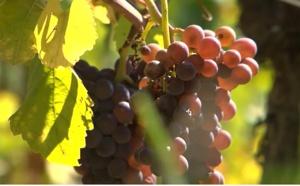 Voyage en Alsace : Colmar, la capitale des vins d'Alsace