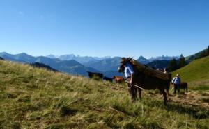 Voyages Vert Vous - E-Grand Tour de Suisse et découverte de l'alpage (EP17)