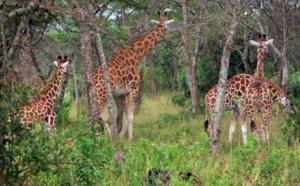 Coronavirus Afrique : J'ai testé pour vous l'Ouganda, confidentiel, safe, nature, préservé… what else ?