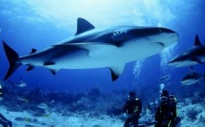 La case de l'Oncle Dom : gang de requins…