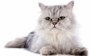 """La case de l'Oncle Dom : Mas... ette, le """"chat"""" fait patte de velours !"""