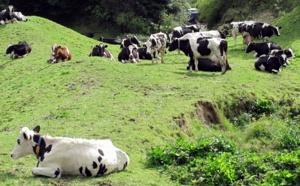 La case de l'Oncle Dom : à chacun son métier et les vache(rie)s seront bien gardées !