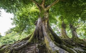 Tourisme durable : Grand Angle décroche le label Europarc