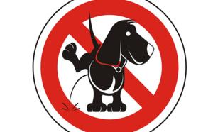 La case de l'Oncle Dom : urgence pour US Airways, qui se donne un mal de chien !