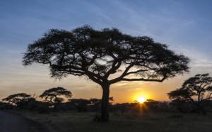 La case de l'Oncle Dom : une histoire d'amour… en terre africaine !