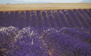 La Provence obtient son Contrat de Destination !