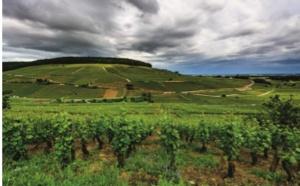 Bourgogne : les Climats du Vignoble inscrits sur sa liste du Patrimoine mondial de l'UNESCO