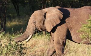 Tanzanie : les coups de cœur et les bonnes adresses de C. Marais (Afrique Authentique)