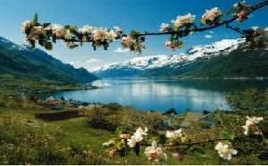 Norvista : priorité à la Laponie et au réseau de distribution