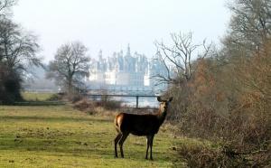 Blois - Pays de Chambord : 100 jours magiques pour valoriser l'offre touristique