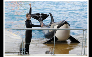 Marineland expected to reopen in March 2016