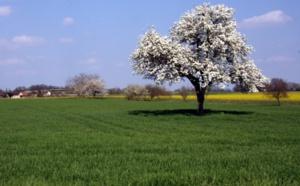 Centre-Val de Loire: Découvrez la Brenne à vélo