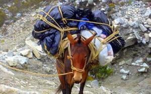 Carburant : chargez pas trop la mule… elle pourrait changer de bât !
