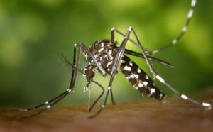 Réunion : 2e cas de virus Zika importé sur l'île