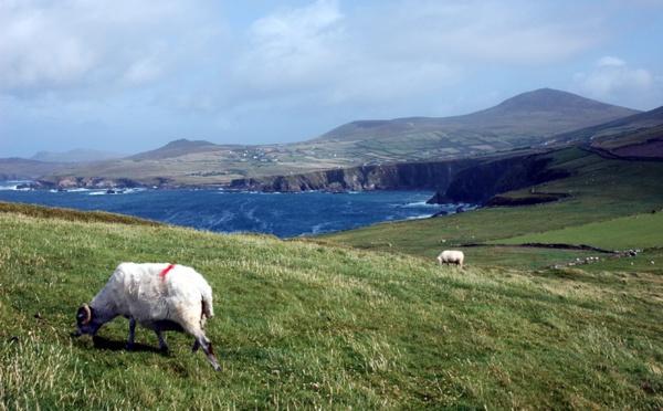 St Patrick : l'OT d'Irlande récompensera l'agence la plus verte de France !