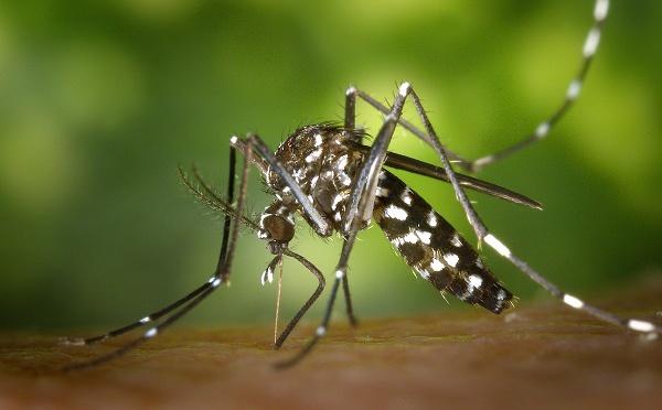 Réunion : l'épidémie de dengue prend de l'ampleur selon la préfecture
