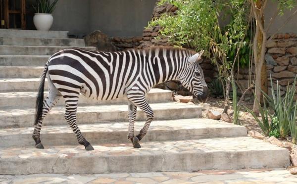 Tanganyika Expéditions lance des safaris en 4x4 électriques