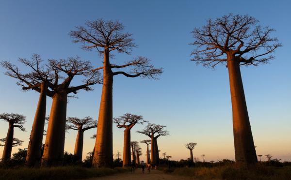 """""""Pays & Marchés du Monde"""" : Behenjy, joyau de Madagascar"""