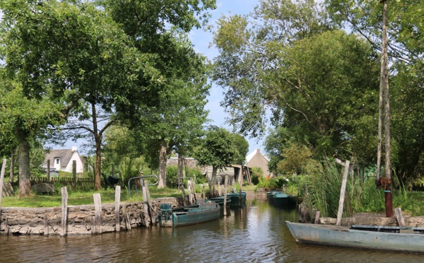 Loire Atlantique : embarquez pour une balade nature en Brière