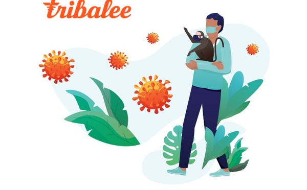Start-up : Tribalee offre l'accès gratuit à son application de team building