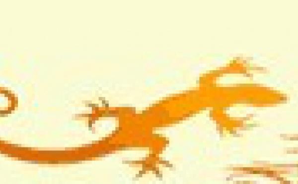 Rendez-vous Futé agence réceptive francophone, spécialiste de l'Australie sur DMCMAG.com !