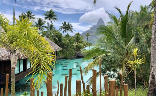 """Michel Monvoisin (Air Tahiti Nui) : """"Les Français ont parfaitement le droit de venir en Polynésie !"""""""