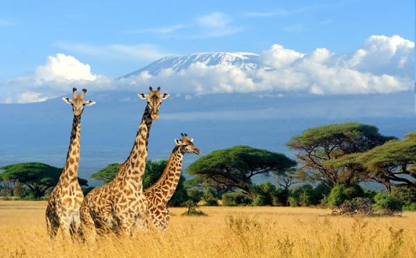 Kenya: la présentation d'un visa électronique obtenu avant le départ sera obligatoire dès le 1er Janvier 2021