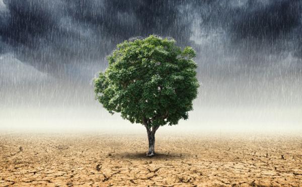 FUTUROSCOPIE - Justice climatique : du crime au délit d'écocide